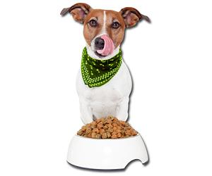 Gratis Hundefutter von Schecker