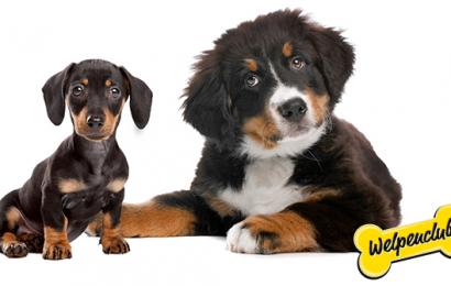 Hundefutter kostenlos